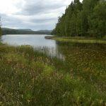 Schwedische Landschaft bei Hedvigsfors Manor